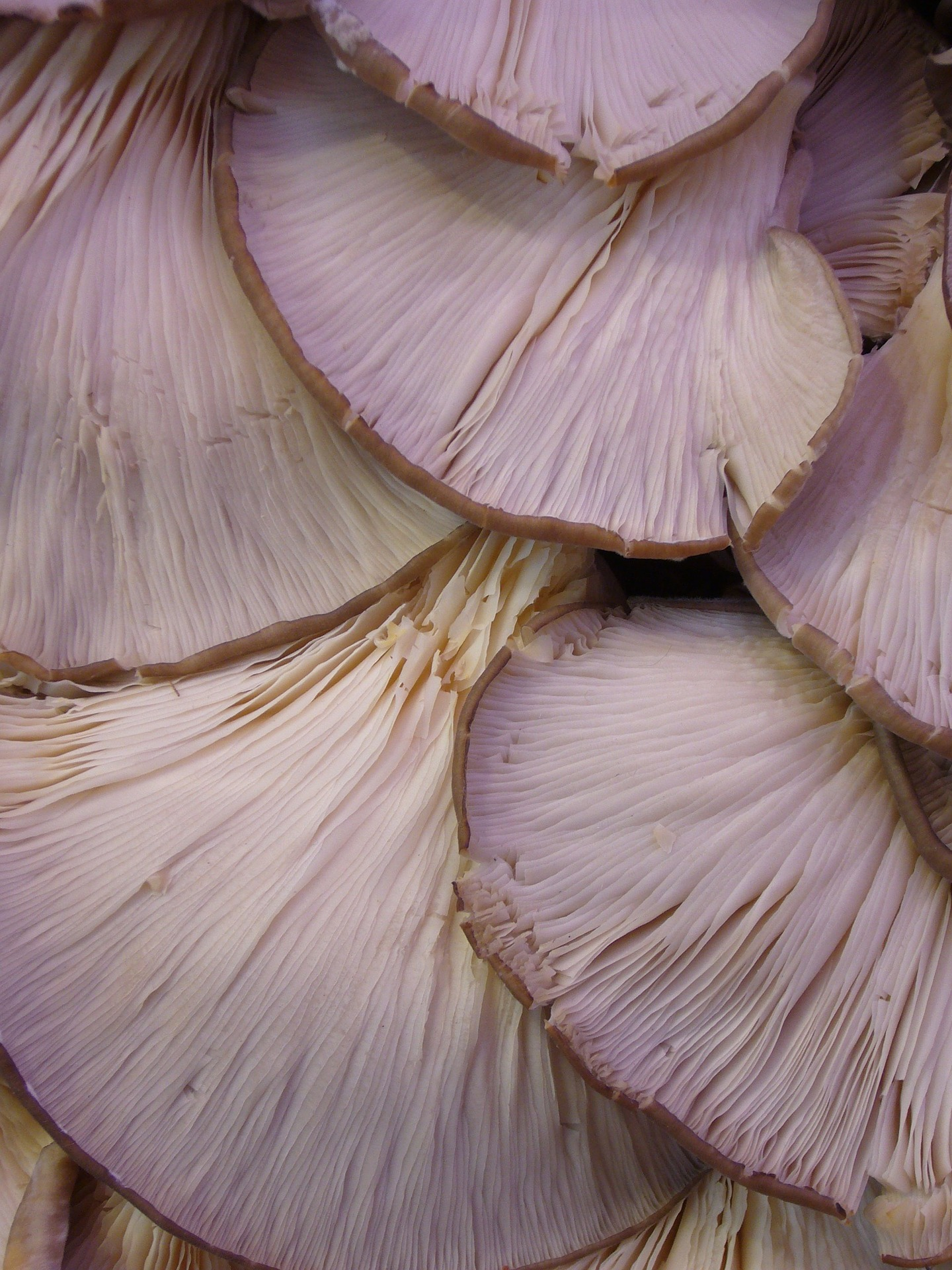 mushrooms-4791_1920