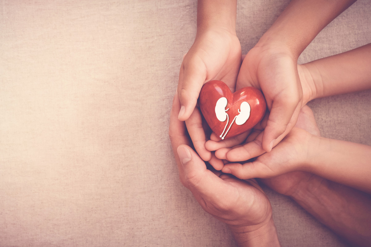 Hands holiding red heart with kidney, world kidney dayshutterstock_13086...